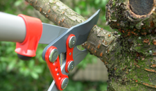 Tree Pruning - Tree Removal